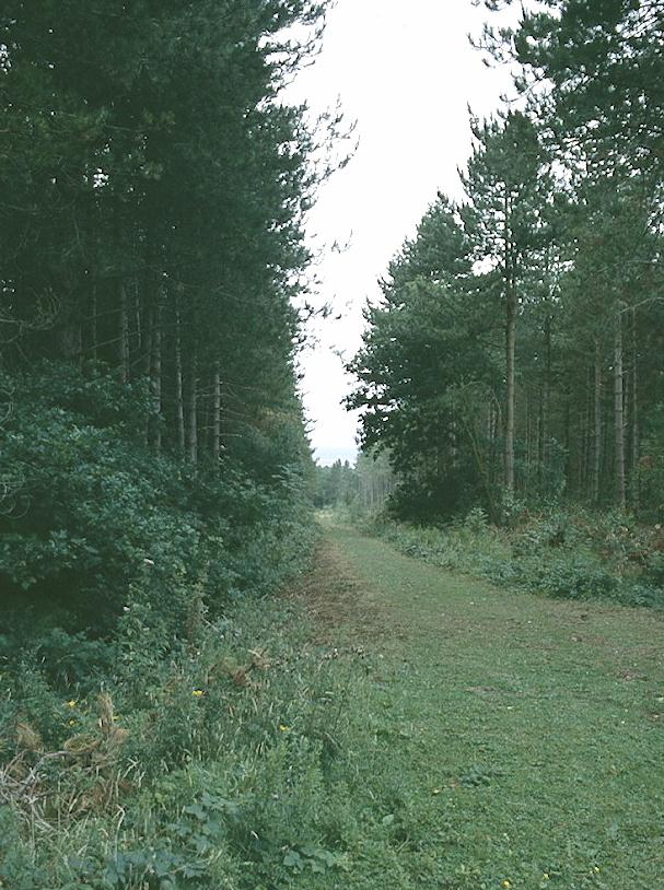 A ride in the Bouldner Forest