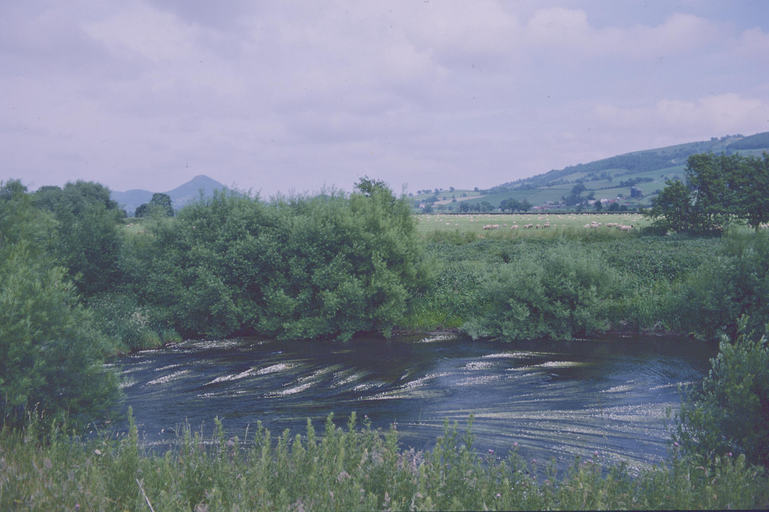 The Severn near Buttington