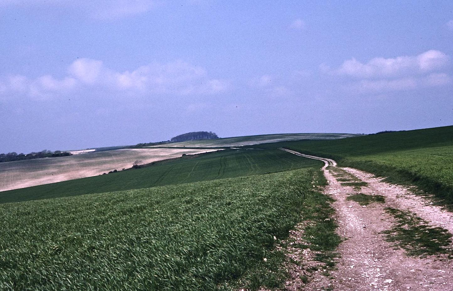 A distant view of Chactonbury Ring