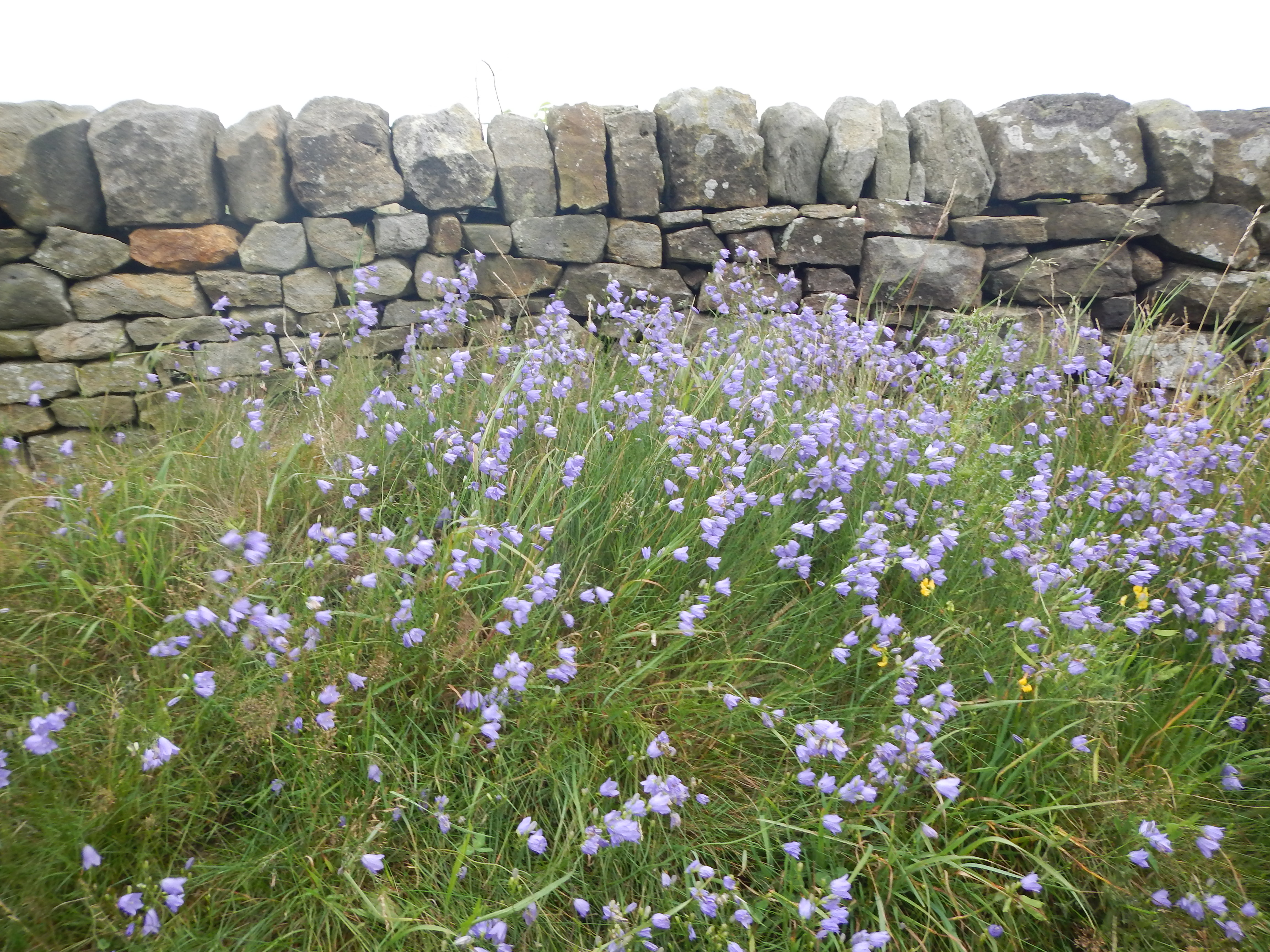 The Cleveland Way is truly a walk of two halves ¬– but stone walls can be found in many locales throughout the venture.
