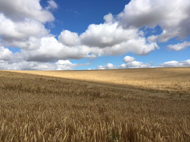 Fields, sky and clouds provide the visual panorama on many stages of The Yorkshire Wolds Way.